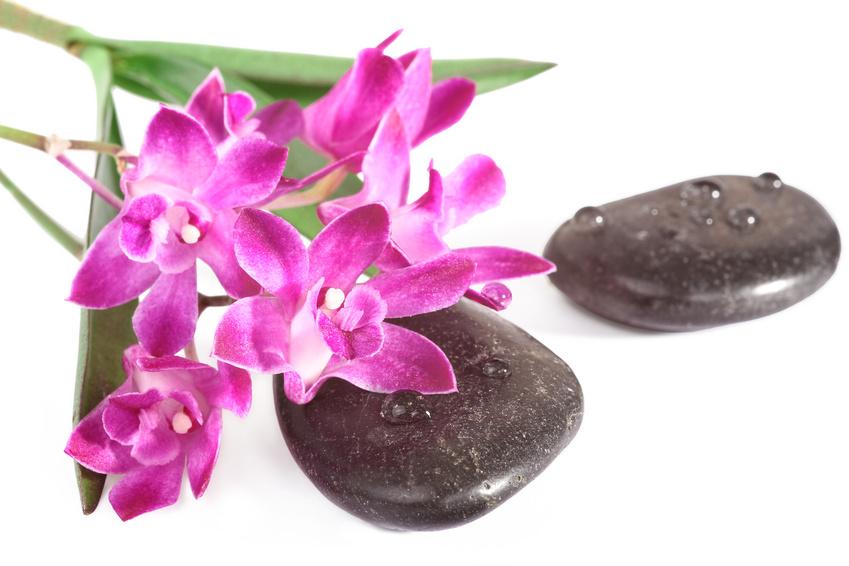 die dendrobium orchideen mein orchideen blog. Black Bedroom Furniture Sets. Home Design Ideas