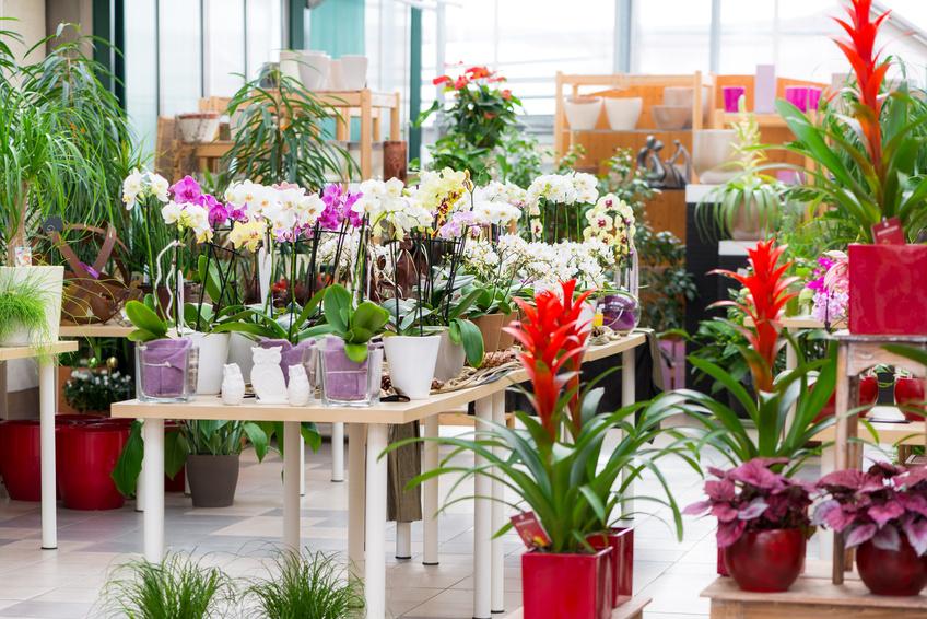 lebensweise und pflege mein orchideen blog. Black Bedroom Furniture Sets. Home Design Ideas