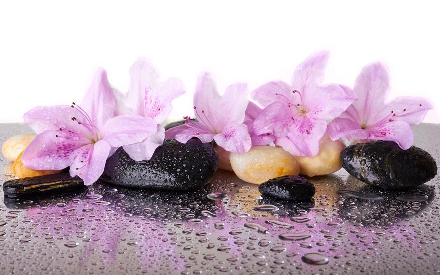 orchideen d ngen mein orchideen blog. Black Bedroom Furniture Sets. Home Design Ideas